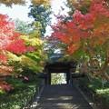 Photos: 円覚寺