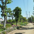 Photos: 花の道