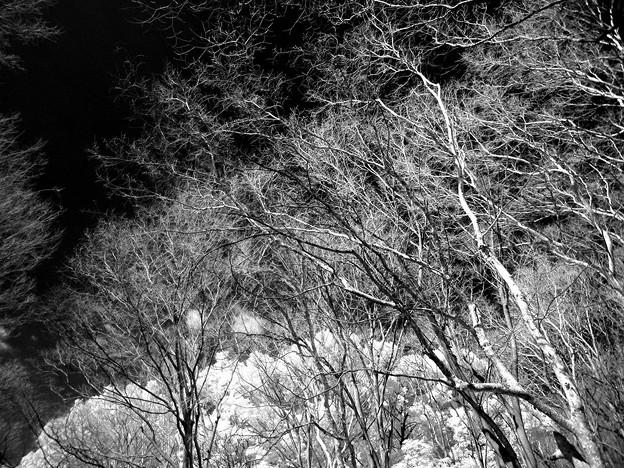 Photos: 冬枯れ