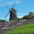 Photos: 風車の丘