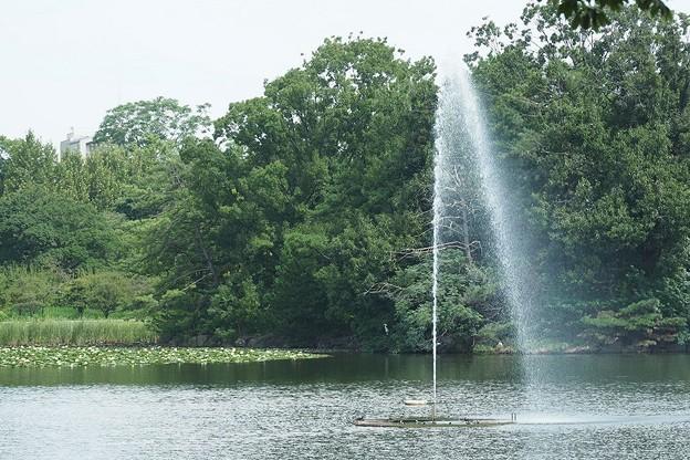 噴水と睡蓮