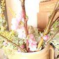 P3061682:桃が咲いたよ