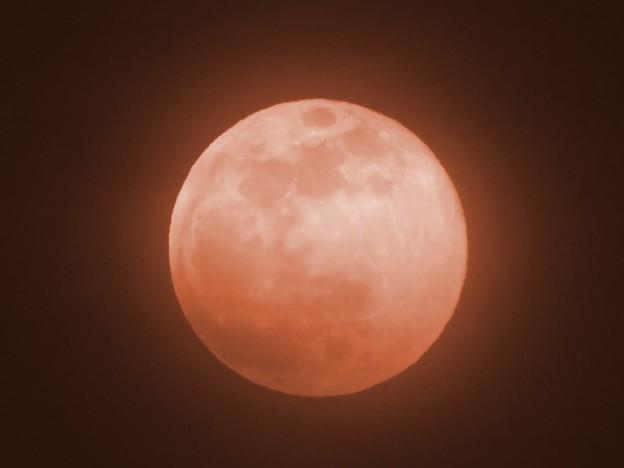 十六夜満月ピンクムーン