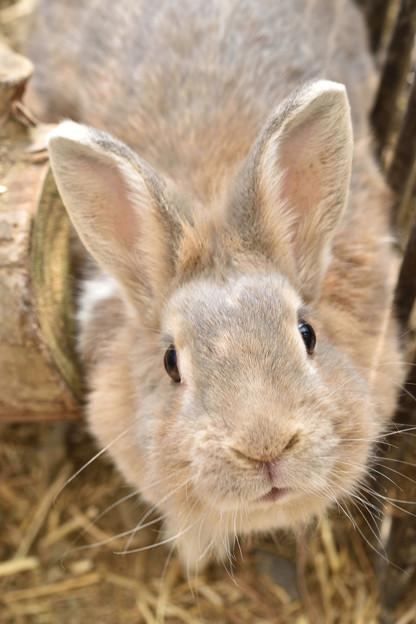 ウサギ 2