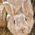 Photos: ウサギ 2