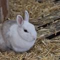 Photos: ウサギ 1