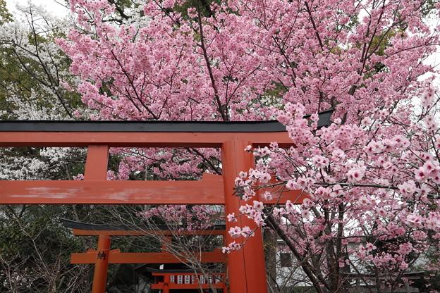 平野神社・稲荷社