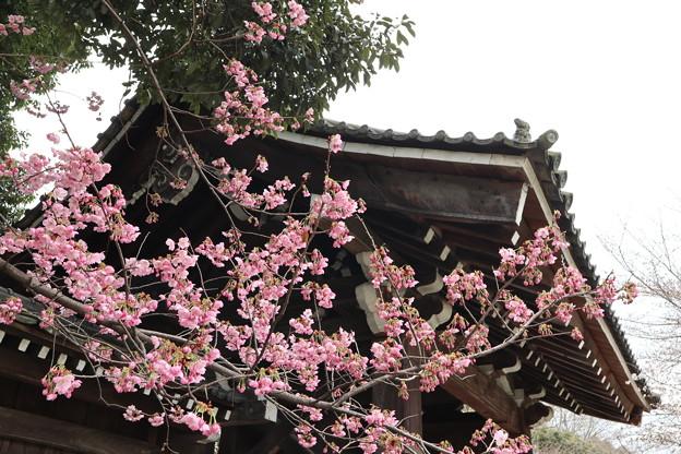 平野神社・南門