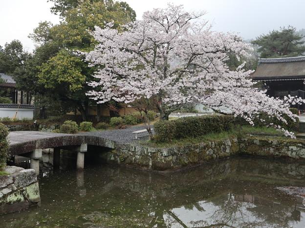 南禅寺・方丈池1