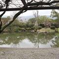 京セラ美術館・日本庭園(藤棚より)1