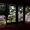 長慶院・額縁庭園(本堂から)2
