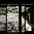 長慶院・額縁庭園(書院から)1