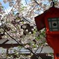 松月の咲く境内2