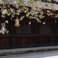 北野桜と回廊2