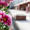 Photos: 団地の花