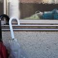 Photos: 二本の傘