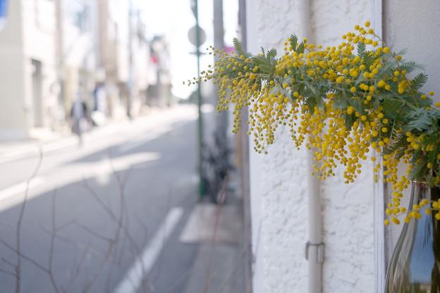 ミモザの咲く道