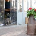 Photos: 看板猫