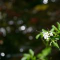 小川の白い花
