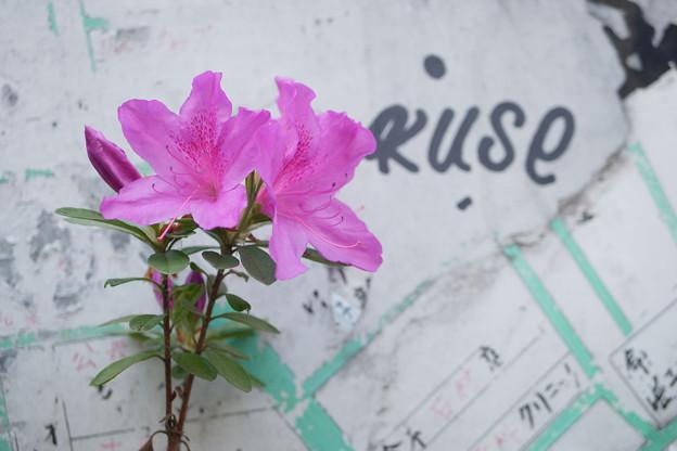 Photos: 地図と花