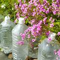 花とペットボトル