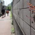 Photos: 塀より出でて
