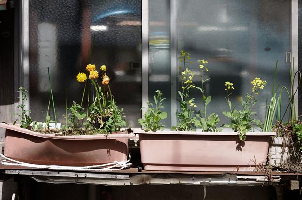 窓辺のプランター