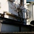 Photos: 屋根猫
