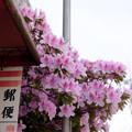 花とマニアック