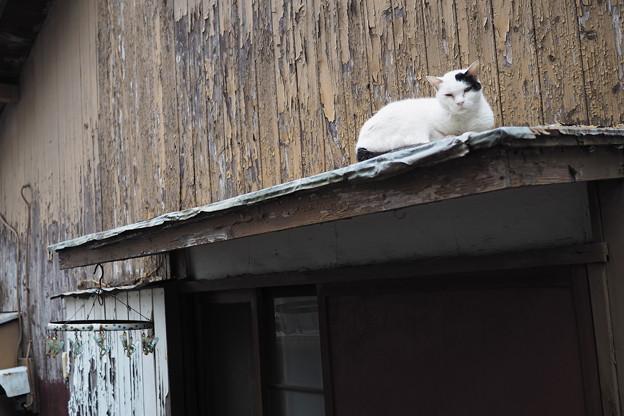 Photos: ひさしの猫