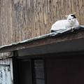 ひさしの猫