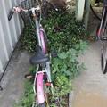 Photos: 花と自転車