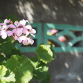 Photos: 塀の横に咲く