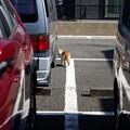 Photos: 振り向く猫