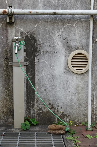 Photos: 洗い場に咲く