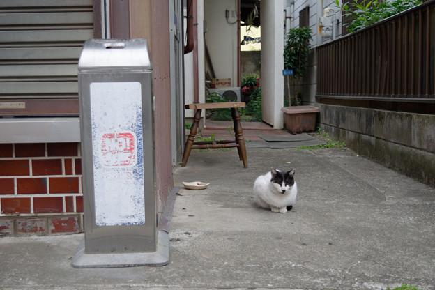 たばこ屋の猫