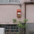 Photos: 郵便受け