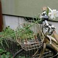 百合と自転車