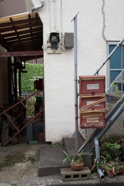 階段の鉢植