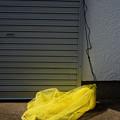Photos: 黄色いネット
