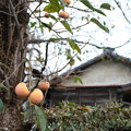 柿の木のある家