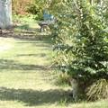 Photos: 木陰の猫