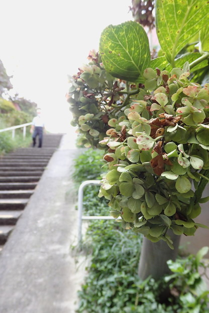 階段に咲く