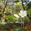 flowers_237