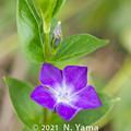 flowers_240