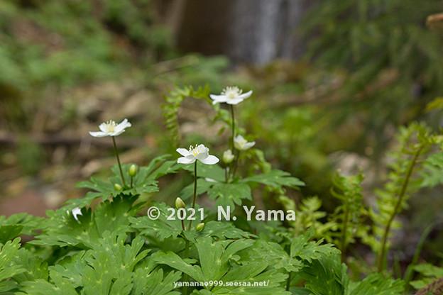 flowers_238