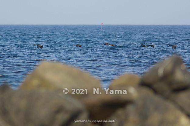 yamanao999_birds_422