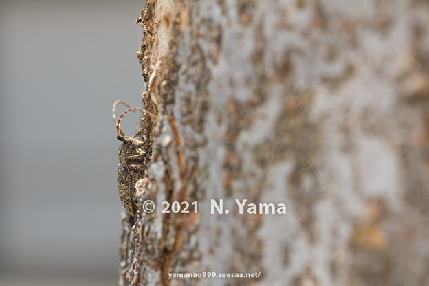 yamanao999_insect2021_009