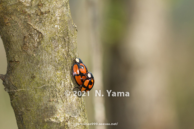 yamanao999_insect2021_005