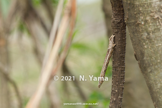 yamanao999_insect2021_010